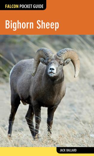 Cover image for the book Bighorn Sheep, 1st Edition