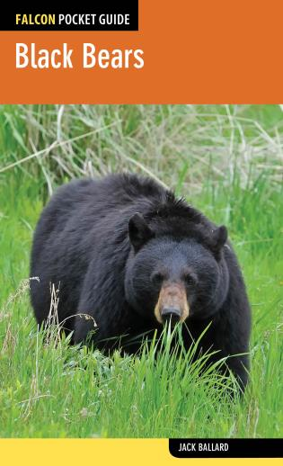 Cover image for the book Black Bears, First Edition