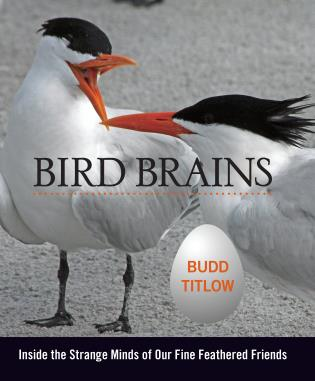Cover image for the book Bird Brains: Inside the Strange Minds of Our Fine Feathered Friends, First Edition