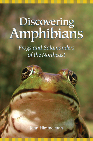 Cover image for the book Discovering Amphibians: Frogs and Salamanders of the Northeast