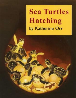 Cover image for the book Sea Turtles Hatching