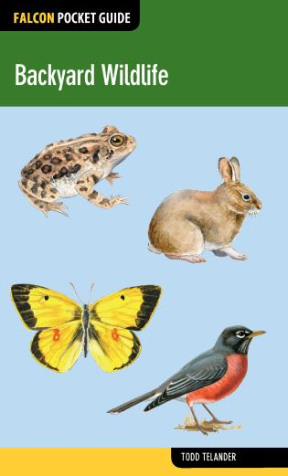 Cover image for the book Backyard Wildlife, First Edition
