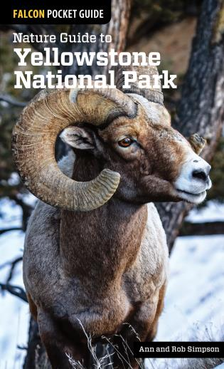 Cover image for the book Nature Guide to Yellowstone National Park