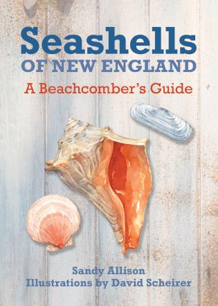 Cover image for the book Seashells of New England: A Beachcomber's Guide