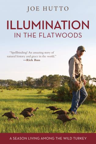 Cover image for the book Illumination in the Flatwoods: A Season Living Among the Wild Turkey