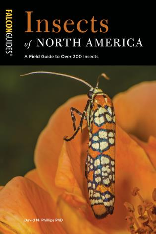 Cover image for the book Insects of North America: A Field Guide to Over 300 Insects