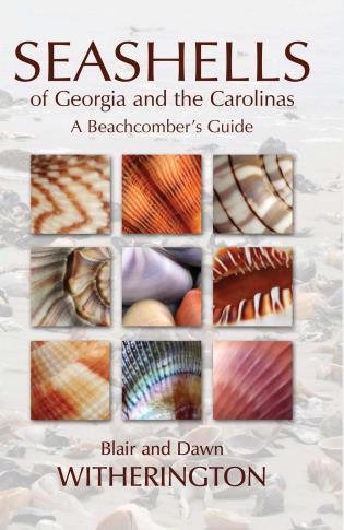 Cover image for the book Seashells of Georgia and the Carolinas