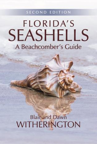Cover image for the book Florida's Seashells: A Beachcomber's Guide, Second Edition