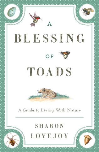 Cover image for the book A Blessing of Toads: A Guide to Living with Nature