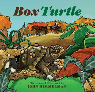 Cover image for the book Box Turtle