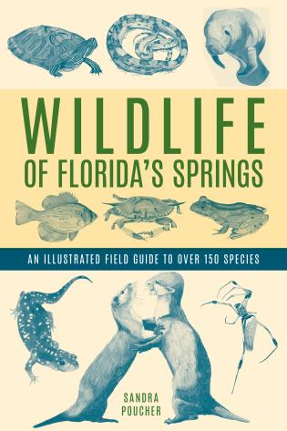 Cover image for the book Wildlife of Florida's Springs: An Illustrated Field Guide to Over 150 Species