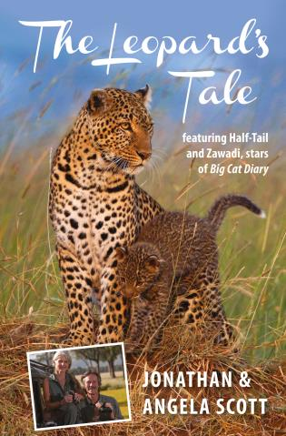 Cover image for the book Leopard's Tale: Featuring Half-Tail And Zawadi, Stars Of Big Cat Diary, First Edition